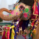 Animal (Elephant) love of India