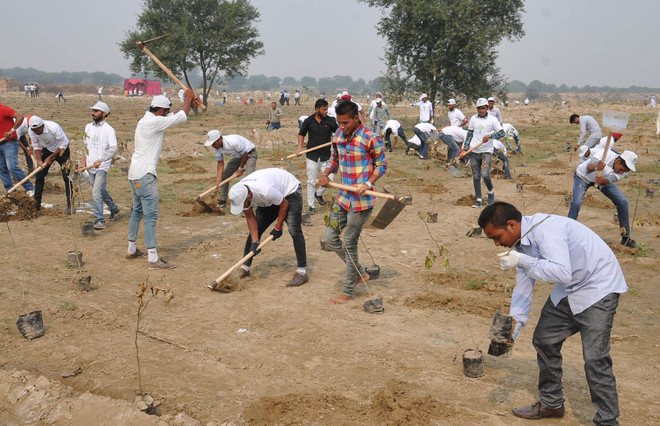 50 million tree plant in one day in India