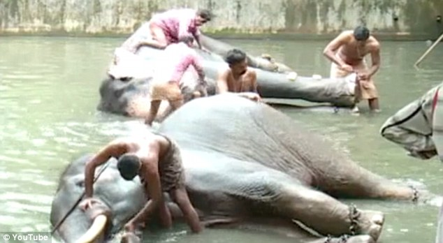 India has a spa for elephants