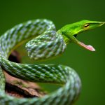 7 Most Beautiful Snakes In World Rainforest