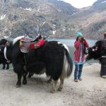 Best Tourist Destinations of North East India